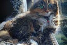 Sweat Kittens/Cats
