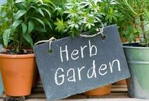Garden Planning / Getting ready for garden season in Vermont - tips, insight, and inspiration!