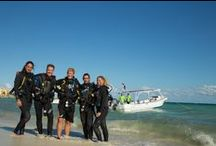 Scuba Playa Dive Shop / Some of our best photos of our staff, dive center, boats and of course some fantastic underwater shots!