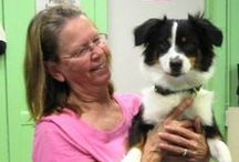 Heading Home / Photo board of dogs and cats from the Tulsa SPCA heading to forever homes