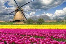 Typish Nederlands