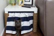 Cats / diy, ideas, cat, cats, adopt, outdoor, animal, pet, recycle, crafts, cheap, easy, bed, toys, warm,
