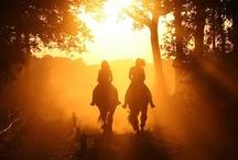{Equestrian} / Horses, horse sayings, pretty horses, horses and horses!  / by Alina