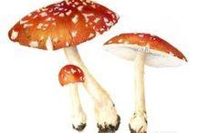 Toadstools / fungi
