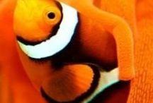 je vois la vie en orange