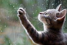 gatito kawaiii hermoso / Mira estos hermosos gatos