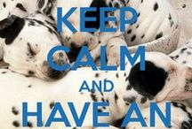 In Love For Dalmatian