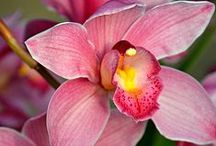 ***Orchids*** / All kinds of beautiful orchids - please feel free to share yours. Please send an email to service@orchideengarten.de if you want to be added. No promotion pleas