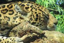 wildlife / the beauty of fauna