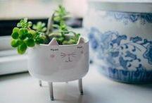 ✿ house plants ✿