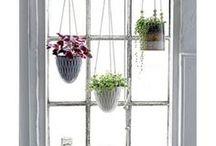 Blumen & Pflanzen / Behälter für Blumen und Pflanzen – Vasen, Töpfe, Hängetöpfe, …