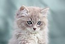Cats / ronron roudoudou