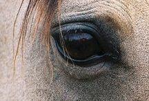 horses, donkeys & riding
