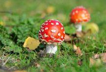 Herfst in boswachterij dorst