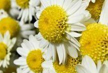 I love daisies