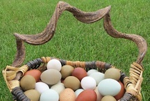 Eggs-traordinary! / Because backyard chicken eggs are the best!