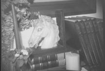 Original photos Diana F+ Lomography