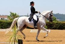Horse & perfection with Quinta•M / Enjoy a journey in Quinta•M to improve yourself in equitation and dressage with our Lusitano horses in a unrivaled place !