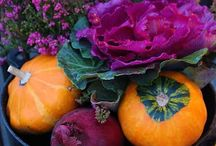 Fall Flowers / by Tracy Fowler