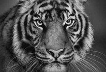 Eläinkuvia/ animals