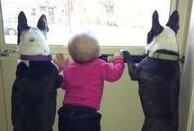 Dieren / Kijk hoe lief en leuk allemaal! #:)