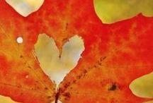 """FALL... WITH LOVE! / Le migliori immagini autunnali: emozioni, colori, realtà e moda della stagione """"gialla"""" per eccellenza! :)"""