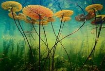 Water Lillies / by Bev Audet