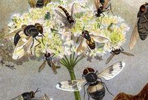 Drop of Honey / by Amy Wylykanowitz