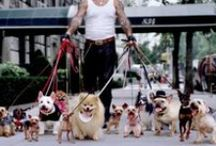 Lifestyle | with Dogs / Treat your dogs like kings!  Sus perros son reyes! www.albertalagrup.com