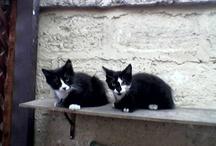 Gatitos y Gatos Ñauuuuu!!