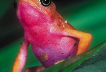 Amazing Frogs / by haley mullinax