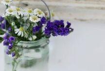 •Gardens•
