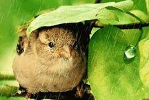 Bundles of joy!!!!!!! / the denizens of the natural world who make life worth living