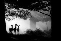 Černobílý svět / Černobílá krása
