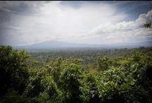 Deforestazione Zero / Deforestazione Zero significa fermare la distruzione delle ultime grandi foreste primarie del pianeta per salvare il clima, le persone e la biodiversità. / by Greenpeace Italia