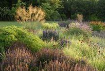 Serene garden / Haver der er mere end blot baggrund. Naturlig simpelhed der skaber en terapeutisk ro