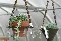 Hangers for plants