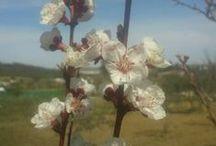 Mi huerto (Primavera 2014)