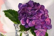 Hydrangea High / Amazing flowers and so classy