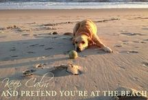 Dogs on Vacation / Surf or Sound has a wide range of pet friendly vacation homes on Hatteras Island. Check out these cute pins, then check out Fido's next summer vacation spot! http://www.surforsound.com/hatteras-island-tour/pet-friendly-vacations