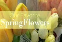 Springeration / Spring inspiration