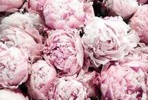 peonies / a board entirely dedicated to my favorite flowers