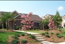Montgomery Metro Apartments for Rent / When you live in one of our communities, your needs are answered by a team of professional, caring team members who take pride in providing a great place to live. You'll also enjoy unmatched services, from modern conveniences like paying your rent online to a guaranteed quick response to any maintenance issues. And you'll find our communities are not only of the highest quality, but also in top locations.