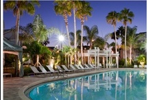 Greater Orlando Apartments for Rent / When you live in one of our communities, your needs are answered by a team of professional, caring team members who take pride in providing a great place to live. You'll also enjoy unmatched services, from modern conveniences like paying your rent online to a guaranteed quick response to any maintenance issues. And you'll find our communities are not only of the highest quality, but also in top locations.