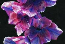 Paintings of Gladioli / A collection of inspiring bright bold beautiful creative floral paintings!