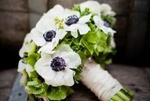 Wedding Flowers | Anemone ❤