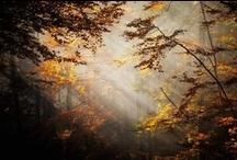 Scenery / www.annabieniek.com