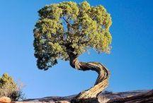 trees of beauty and wonder / by Bill Kellar