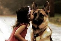 Dogs Pets / Pet Dogs... Love