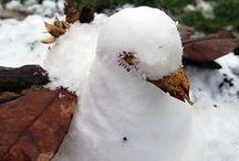 Activités d'hiver / Créatives, poétiques et réalistes, des activités pour célébrer l'hiver... pendant 3 mois !